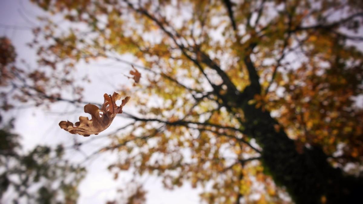 albero foglia cade